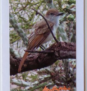Ash Throated Flycatcher Bird Greeting Card
