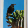 Starling Bird on Saguaro Cactus Greeting Card