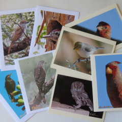 Southwest Bird Greeting Cards