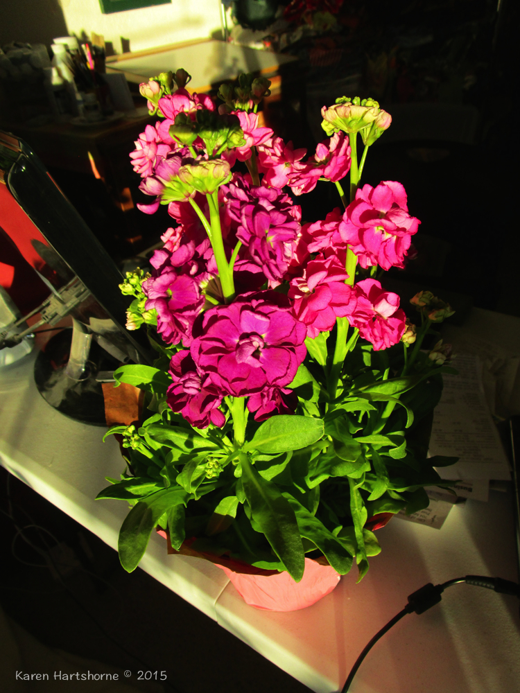 Saturday Morning Flowers