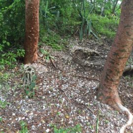 Calusa Indian Mound on Pine Island, Florida